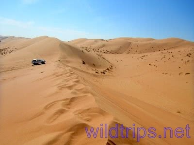 Jeep on a dune in the Al Sharqiya Sands Desert in Oman