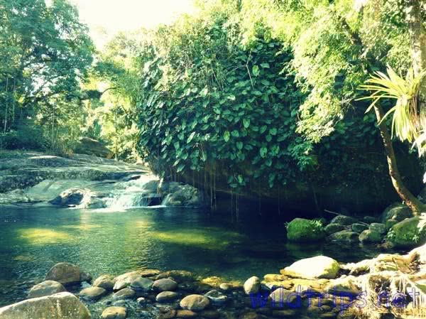 Paraty Jungle