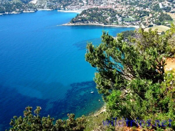 Cassis, Provenza