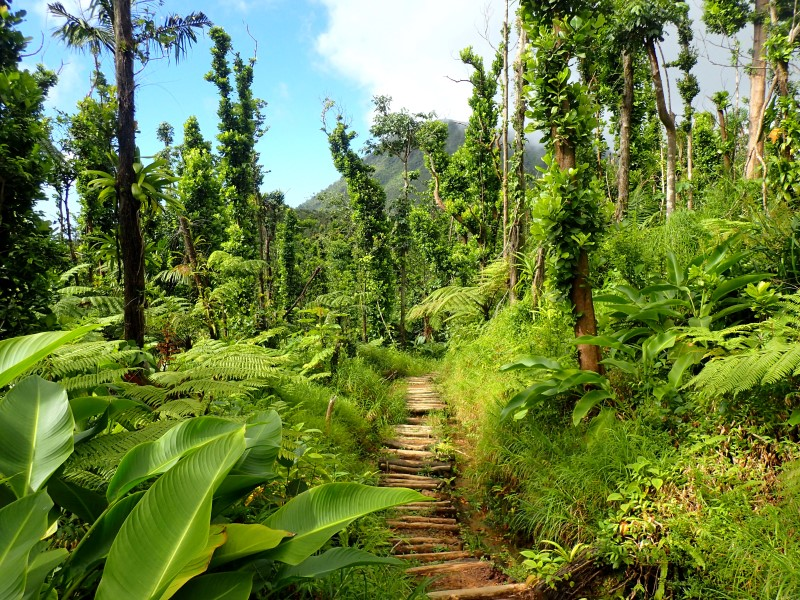 Boiling Lake Trail, Dominica